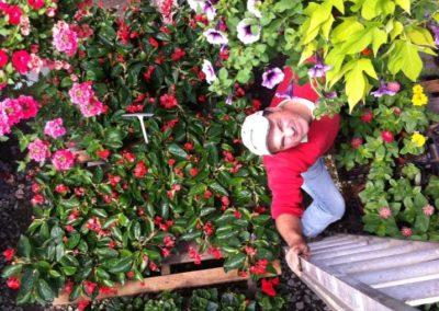 Henrys-Gardens-Above-FlowerBaskets