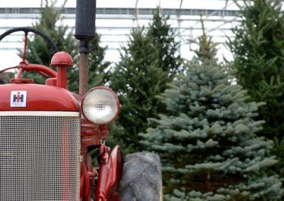 Henrys-Gardens-Christmas-Trees