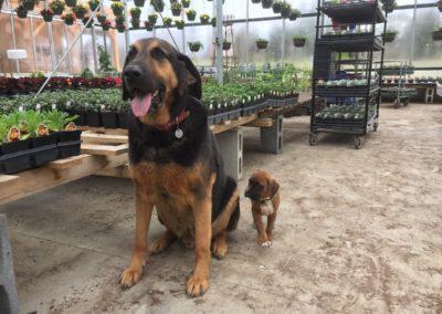 Henrys-Gardens-Dogs