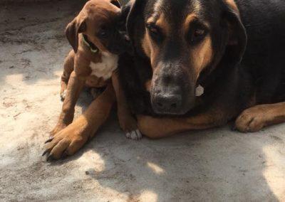 Henrys-Gardens-Family-Dogs