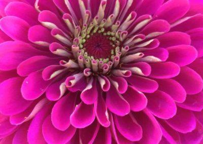 Henrys-Gardens-Flower-Closeup2