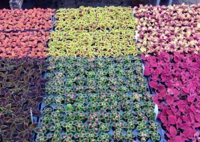 Henrys-Gardens-Flower-Rows