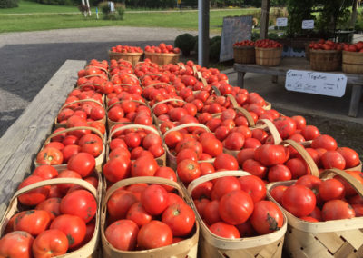 Henrys-Gardens-Fresh-Canning-Tomatoes