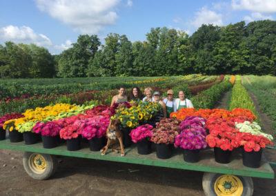 Henrys-Gardens-Garden-Flowers