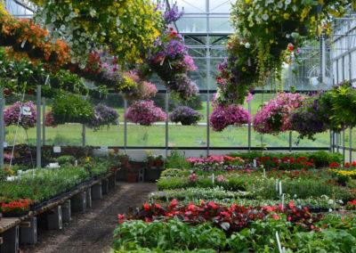Henrys Gardens - Eden, NY