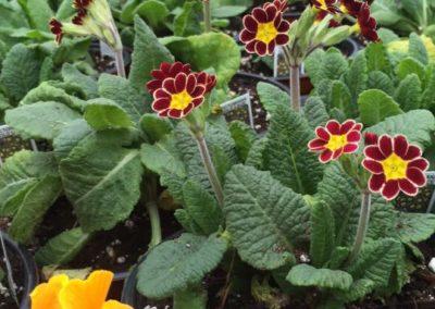 Henrys-Gardens-Perennials