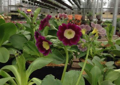 Henrys-Gardens-Plant-Closeup