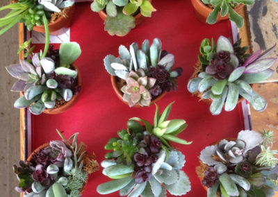 Henrys-Gardens-Plants